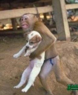 Обезьянка спасает щенка из пожара
