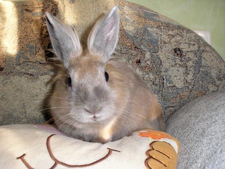 Касин заяц