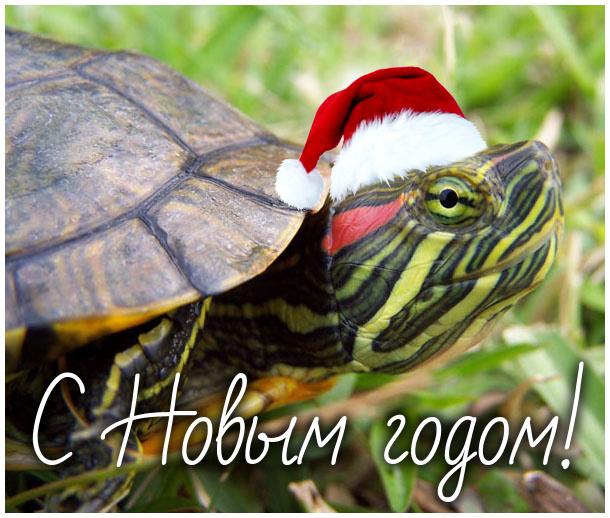От черепахи с Новым годом