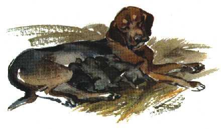 текст изложение арктур гончий пес