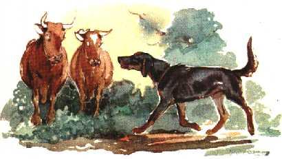 картинки арктура гончего пса пара представляет своей