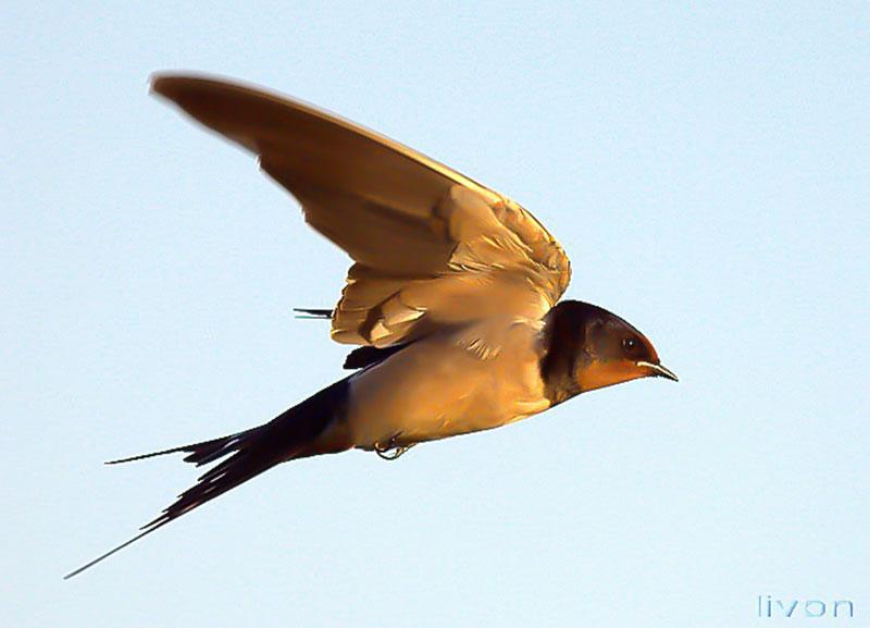 картинка птица в полёте