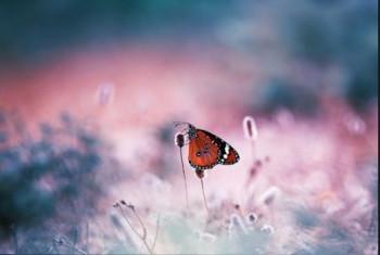 Когда садится бабочка и складывает крылья