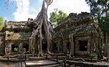 Камбоджийский храм и гигантское дерево