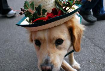 Парад собак
