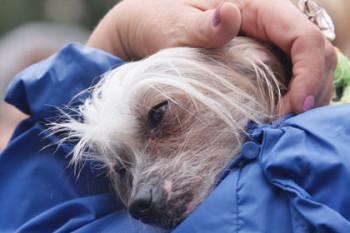 Регистрация и налог на домашних животных