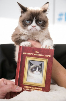 Самая сердитая кошка в мире написала книгу