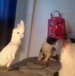 Попугай среди котов